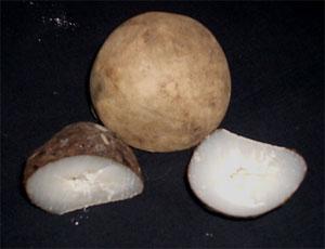 Wounaan tagua nut carvings galería namu u costa rica online